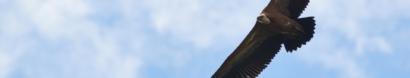 Altura – Associazione per la Tutela degli Uccelli Rapaci e dei loro Ambienti