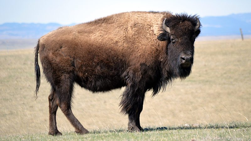 Sustainability Mission/Vision